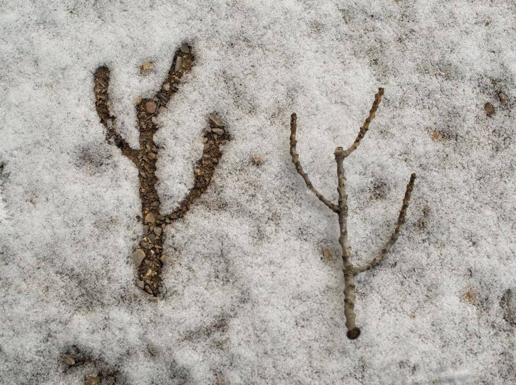 huella nieve