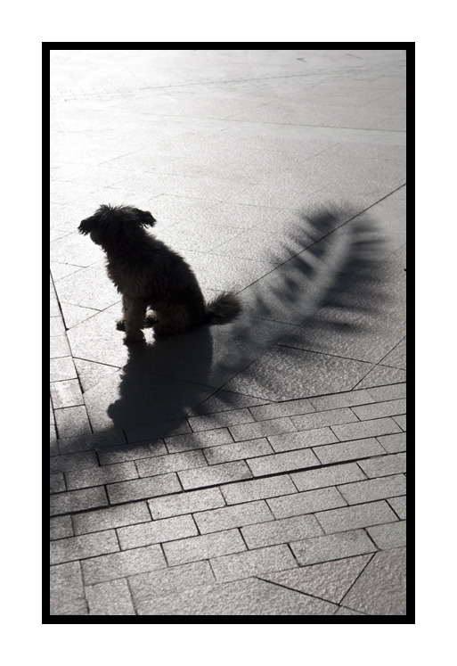 Una sombra. Una luz. / A shadow. A light