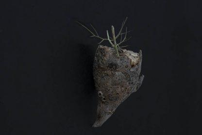 vegetal II